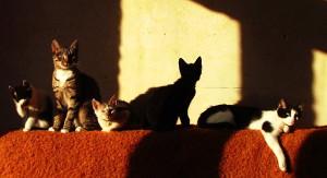 koty w domu tymczasowym
