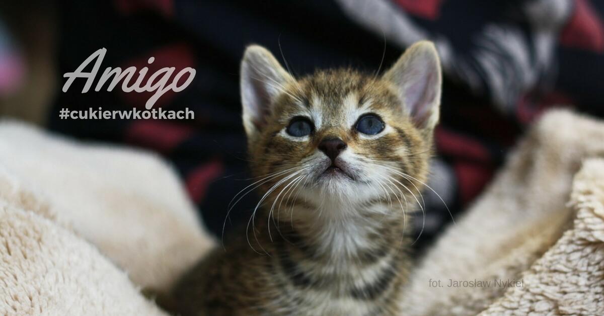 #cukierwkotach Amigo www.listydokota.pl