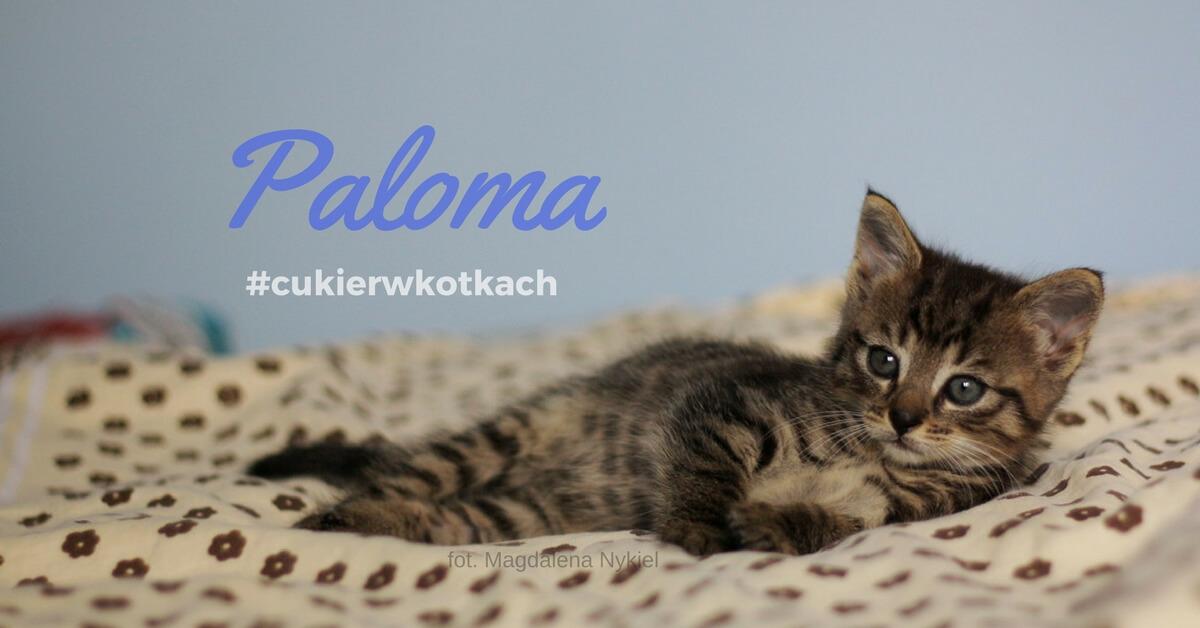#cukierwkotkach Paloma www.listydokota.pl